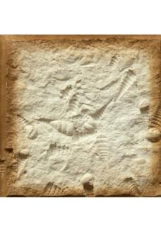 Stone Master Muszle 1 12x12cm